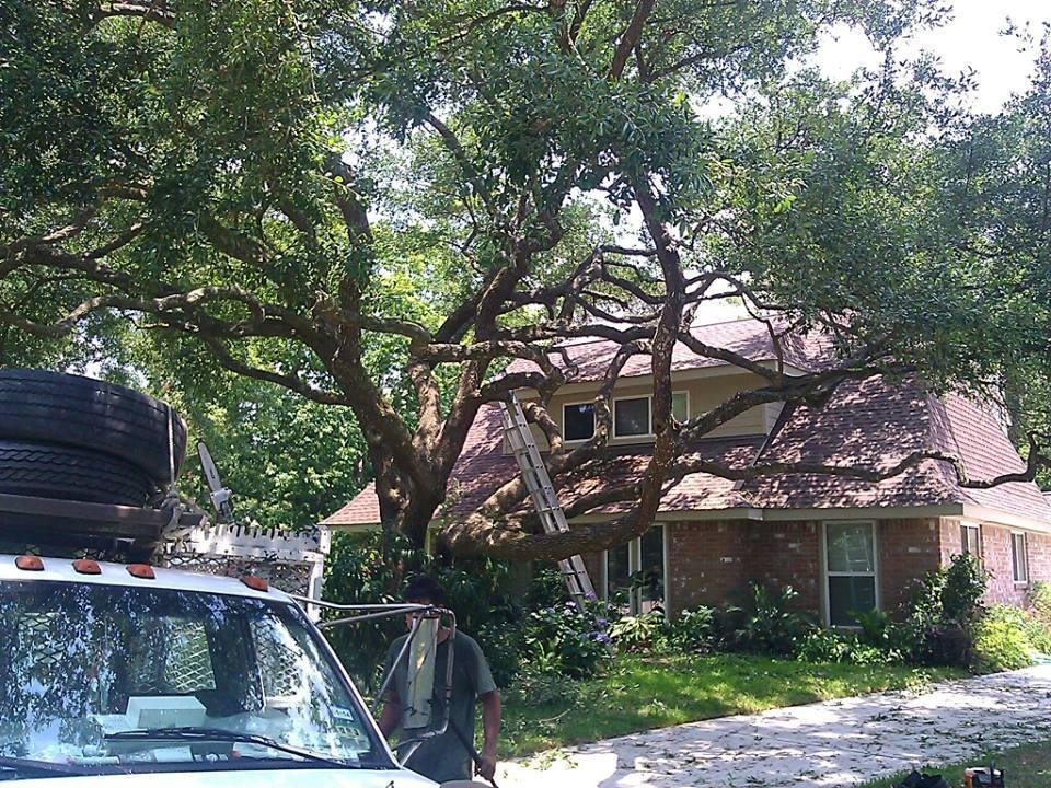 Tnt Tree Service Channelview Tx 77530 Yp Com