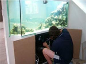 Aquarium Sales Services Fintastic Charlotte Nc