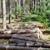 Northwest Logging Company, LLC