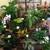 Razanne Flowers
