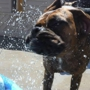 BARK!! Doggie Daycare