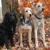 Pet Care Kennels