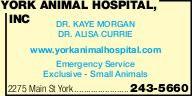 York Animal Hospital