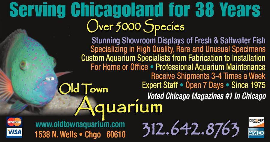 Old Town Aquarium