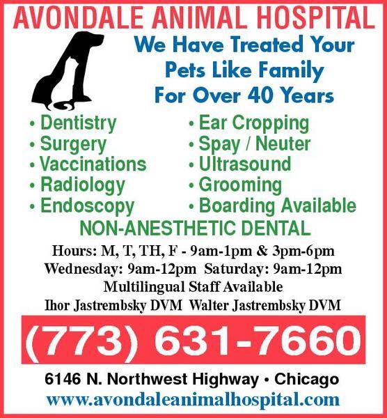 Avondale Animal Hospital