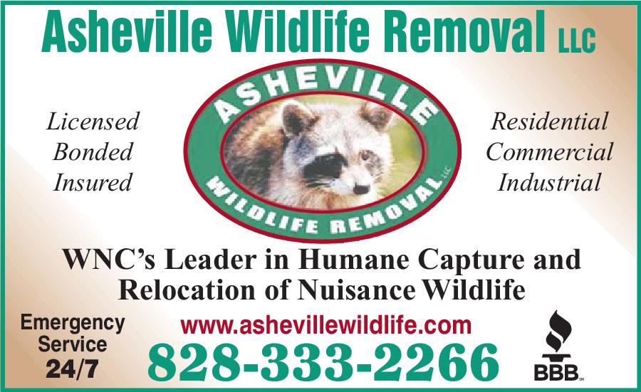 Asheville Wildlife Removal