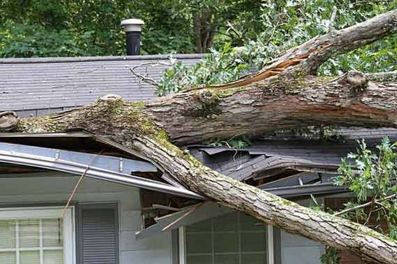 570-380-fallen-tree-on-house