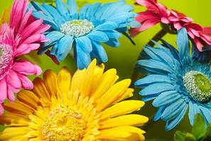 570-380-flowers-daisies-colorful