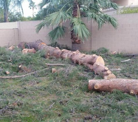 TDR Tree Services - Mesa, AZ. pine tree removal in Mesa Arizona