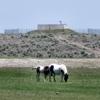 Gypsy Ranch