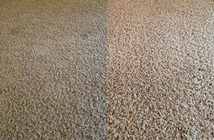 I can't believe the difference in our carpet! Wow!!!