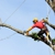 Highpoint Tree Care