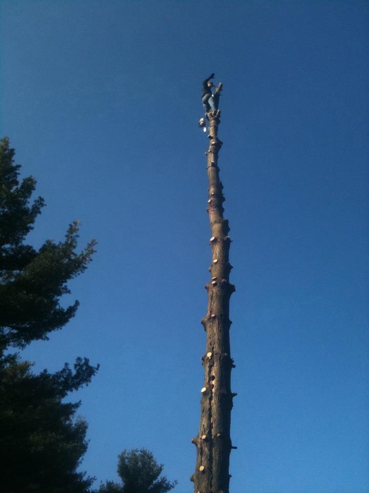 Alpine Tree And Shrub Weirton Wv 26062 Yp Com