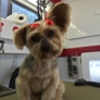 Mad Dog Mobile Grooming - El Paso, TX. He sends us pics of our babies :)