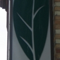 Green Leaf Vietnamese Restaurant - Seattle, WA