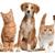 Lindsay Veterinary Clinic