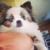 Dara's Doggie Express Mobile Grooming