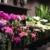 Buncha Blooms Flower Shop