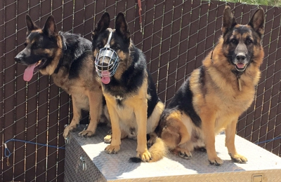 AAA Guard Dog Rental & Sales. Let one of our dogs protect your property.