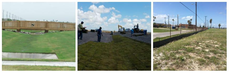 Erosion Amp Drainage Management Buffel Grass Seed Company