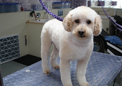 Diana's Personal Touch Boarding & Grooming Kennels - Traverse City, MI