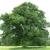 Hagstrom & Sons Tree Service