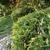 Longhorn Landscaping LLC