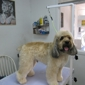 Pawsitively Groomed Pet Salon - Burlingame, CA