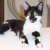 Cats Only Veterinary Hospital