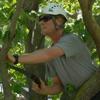 Hawthorne Brothers Tree Service Inc