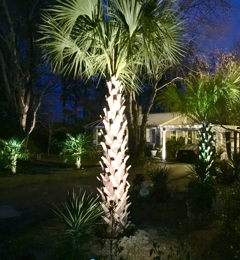 Paradise Palms, Inc. - Raleigh, NC. Love them!