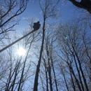 Mighty Oak Tree & Lawn Care
