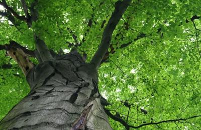 McCray's Tree Service - Verona, VA