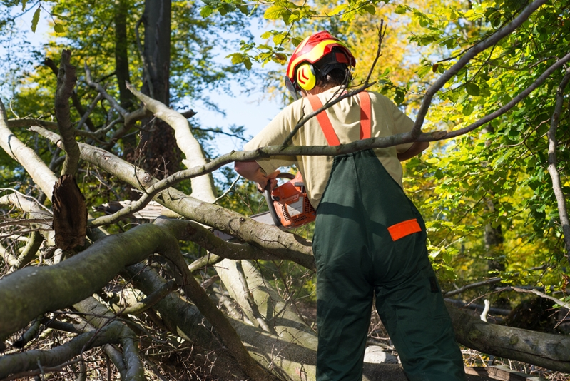 There's a lot to know concerning safe tree removal.
