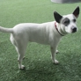 WagVille - Los Angeles, CA. holistic dog care in los angeles, ca