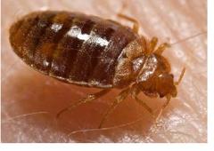 Budget Brothers Termite Pest Elimination Phoenix