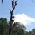 Everett Nichols Tree Service