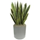 Plants-R-Us