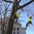 Boley Tree & Landscape Care Inc