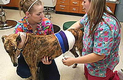 Armenia Animal Hospital Inc - Tampa, FL