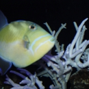 Reef Solutions