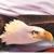 Golden Eagle Charter Inc.