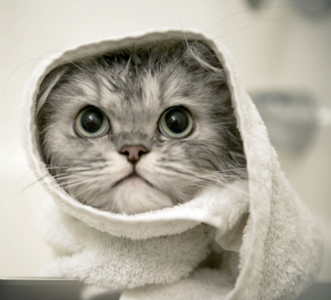 cat in a towel