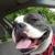 Vet For Pet Animal Clinic