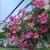 Eckert's Greenhouses & Perennials
