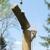 Chief Tree Care