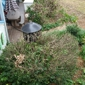 Donnie Williard Lawn Care & Landscaping - Winston Salem, NC. Completely cut down the bushes that serve as privacy to back porch - if he was going to do this they should have been removed