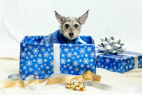 Don't forget to keep pets safe at the holidays, too.