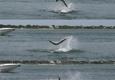 Grey Ghost Fishing Charters - Stuart, FL