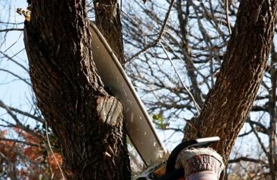 Stan's Tree Service - Port Richey, FL